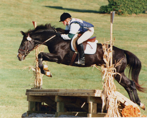 Hunter Jumper Horse Riding Lessons