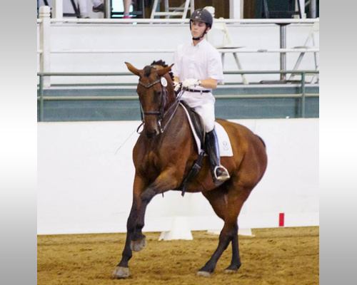 Dressage Horseback Riding Lessons